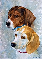 Beagles (Special Order)